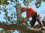 Удаление деревьев - фото 1