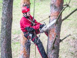 Спилить аварийные ветки на дереве