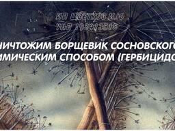 Уничтожаем Борщевик Сосновского химическим способом!