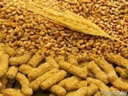 Услуги по экструдированию с выездом зерновых и бобовых
