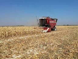 Услуги уборки урожая кукурузы на силос.