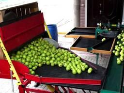 Установка для калибровки/сортировки яблок