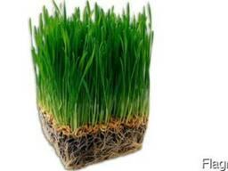 Устройство газона