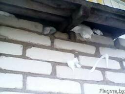 Утепление пеной стеновых пустот дома. Бипор.