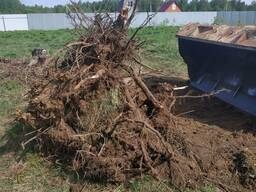 Вывоз спиленных деревьев веток пней