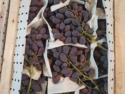 Виноград из Узбекистана