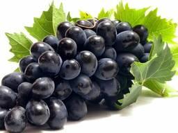 Виноград ОПТОМ из Турции