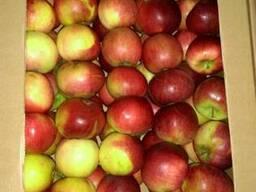 Яблока Оптом КФХ