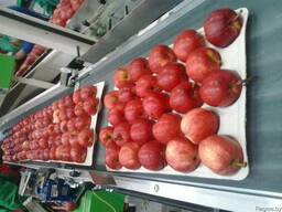 Яблоки - фото 3