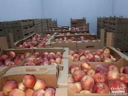 Яблоки и картофель