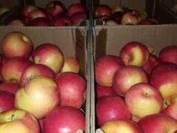 Яблоки из Македонии