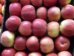 Яблоки РБ.