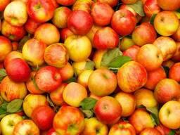 Яблоки урожая 2018
