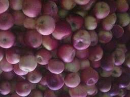 """Яблоко """"Алеся"""" 65 до 2, 0 тонн"""