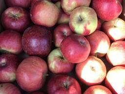 Яблоко свежее органическое
