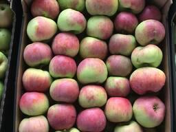 Яблоко свежее РБ