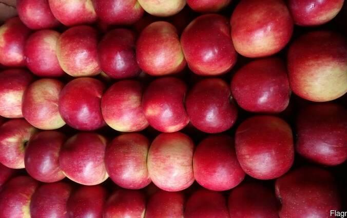 Яблоко свежее РБ раннее 2018