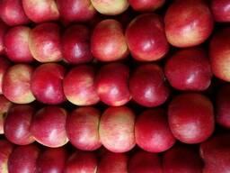 Яблоко свежее РБ раннее 2018 - фото 2