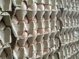 Яйцо инкубационное РОСС 308, от производителя