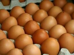 Яйцо куплю