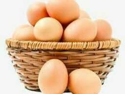 Яйцо куриное( все категории)