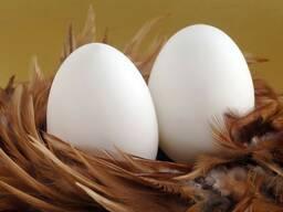 Яйцо С1. С0. Д1. Д0