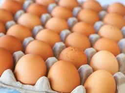 Яйцо С2