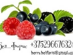 Закупаем дикорастущую ягоду и грибы