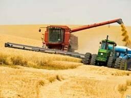 Закупаем фуражное зерно на постоянной основе!Платим сразу!