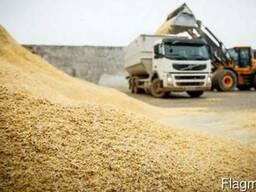Закупаем фуражное зерно!Платим сразу!Свои зерновозы!