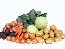 Закупаем картофель, лук, морковь, свеклу на переработку .