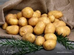 Закупаем картофель в Беларусии оптом