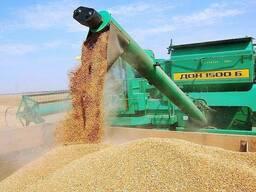 Рапс, сурепицу, подсолнечник, сою, кукурузу, пшеницу