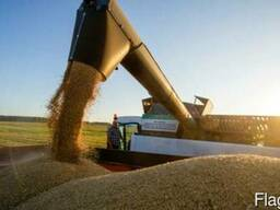 Закупаем зерно, все культуры, дороже гос. цен!