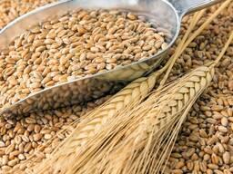 Зерно (зерносмесь)