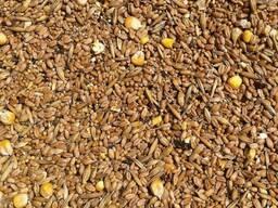 Зерносмесь, овес, пшеницу, ячмень, тритикале, рожь.