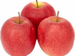 Зимнее яблоко с дисконтом любой объём.